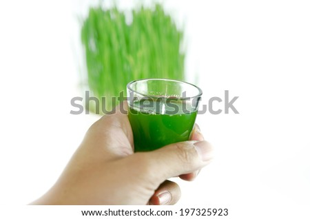 Fresh Wheat Grass for Juicing - stock photo
