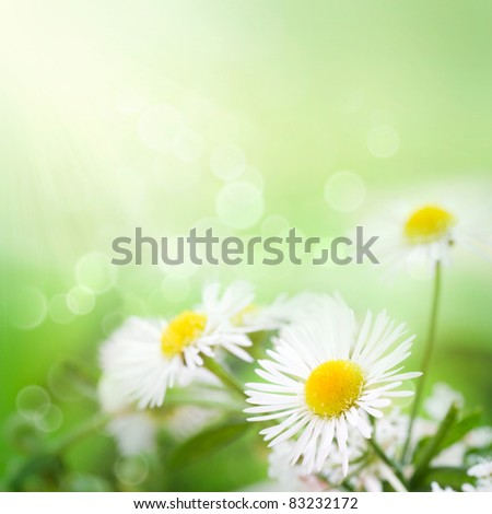 Fresh wildflowers spring or summer design. Floral nature daisy abstract background in green and yellow - stock photo