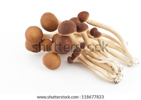 Fresh yanagi mushrooms isolated on white background - stock photo