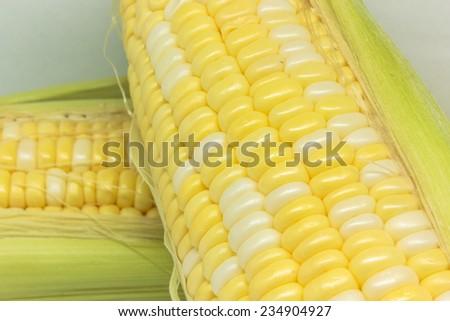 fresh yellow corn, sweet corn - stock photo