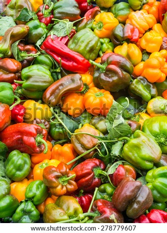 Fresh Yellow Green and Red Pepper Capsicum - stock photo