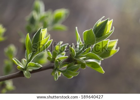 Fresh young leaves. Spring time concept. Soft focus, macro view - stock photo