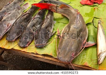 Freshly caught catfish on palm leaf in a morning fish market, Luang Prabang, Laos - stock photo