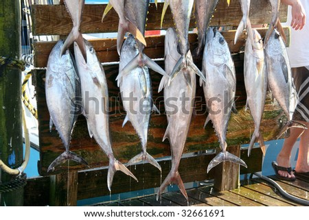 Freshly caught fish hang on pegs for the proud fishermen's photo opportunity at Destin docks in Florida's Panhandle. - stock photo