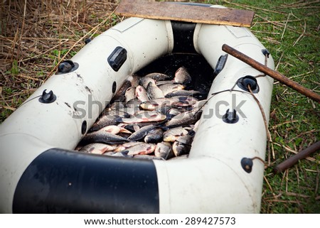 Freshly caught fish in a rubber boat - stock photo