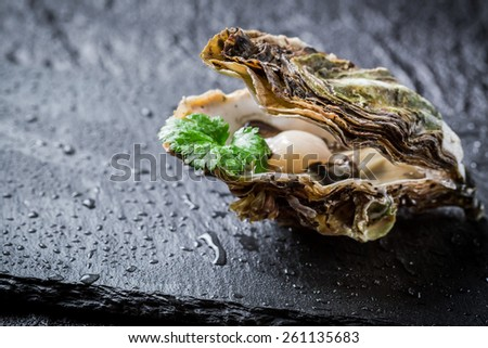 Freshly caught oyster in shell on ice - stock photo