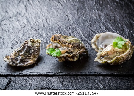 Freshly caught oysters on black rock - stock photo