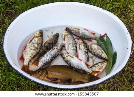 Freshly caught river fish - stock photo