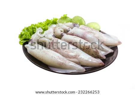 freshly caught squid on white background - stock photo