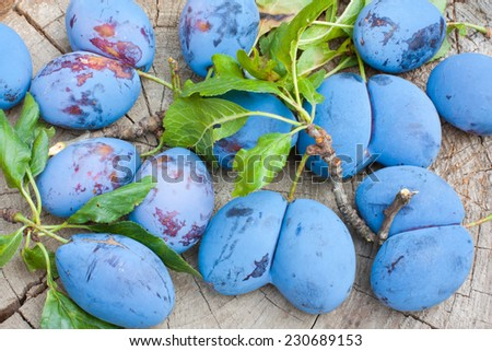 Freshly collected malformed plums. - stock photo