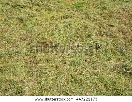 Freshly cut long grass close up. - stock photo