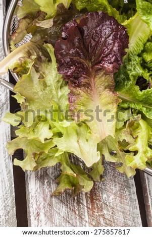 Freshly harvest Lola Rosa lettuce, mustard greens, buttercrunch, and assorted lettuce vertical shot on weathered old barn wood - stock photo