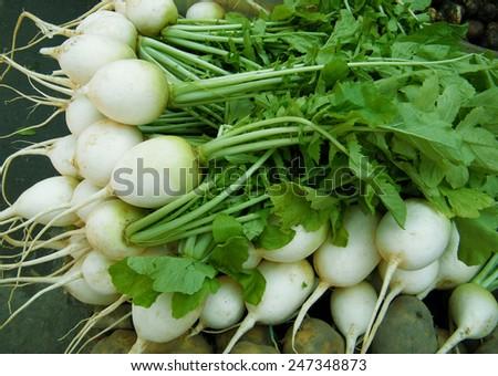 Freshly harvest white radish on a market stall. - stock photo