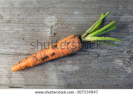 Freshly harvested carrot, top view - stock photo