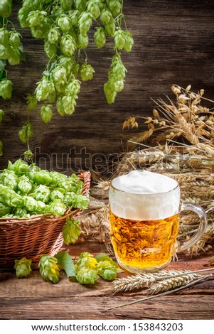 Freshly harvested hop cones and cold beer - stock photo