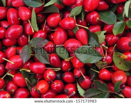 Freshly harvested rose hips on a tray  - stock photo