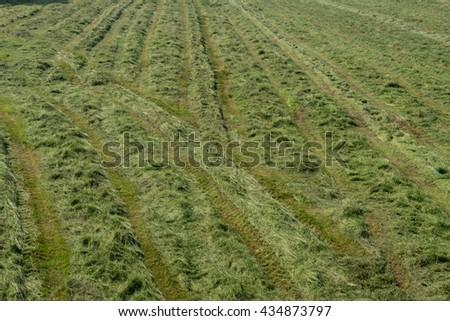 freshly hewn hay in a meadow / freshly hay - stock photo