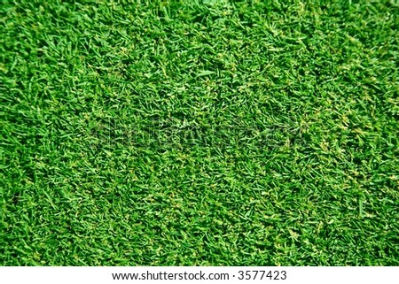 freshly lawn grass - stock photo
