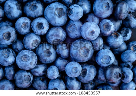 Freshly picked blueberries - stock photo