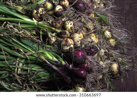 Freshly picked crop of onions. background - stock photo
