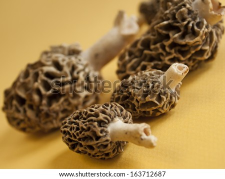 Freshly picked  flavorful morel mushrooms. Shallow DOF. - stock photo