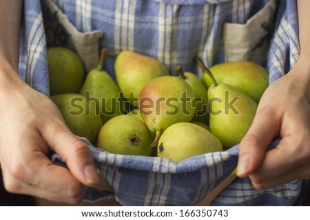 Freshly Picked Pears - stock photo