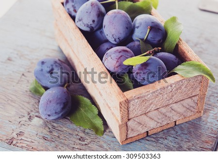 Freshly Picked Purple Plums - stock photo