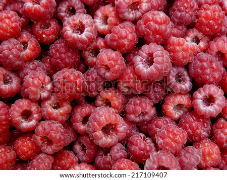 freshly picked raspberries background - stock photo