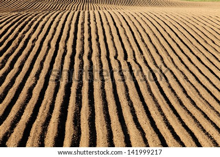 Freshly planted potato field - stock photo