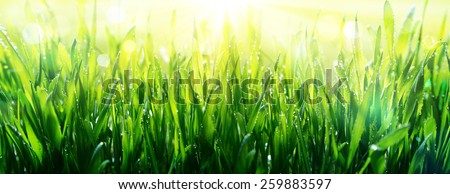 freshness of spring - dew on grass  - stock photo