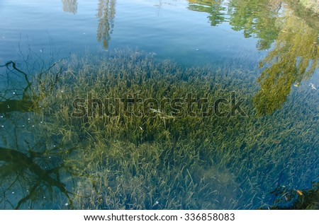 freshwater algae beneath the surface of the water in the lake - stock photo