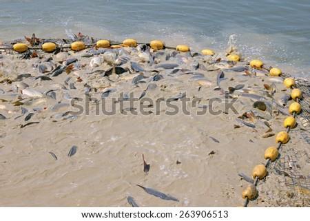 Freshwater fish in fishing net - stock photo