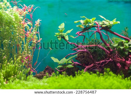 Freshwater green aquarium with plants and fishes. - stock photo