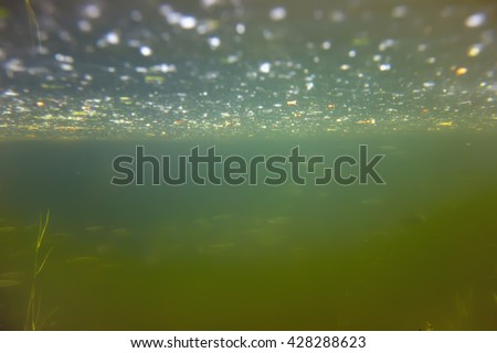Freshwater underwater scene Freshwater fish rivers and lakes - stock photo