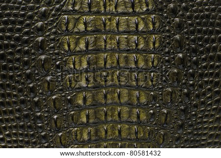 Freshwater yellow crocodile bone skin texture background. - stock photo