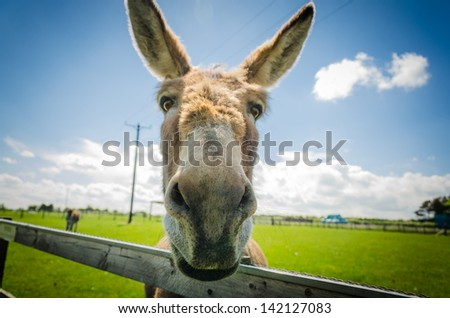 Friendly donkey at farm visitor centre, Durham, England, UK - stock photo