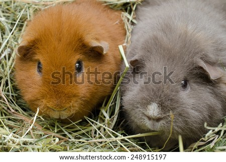 friends in hay - stock photo