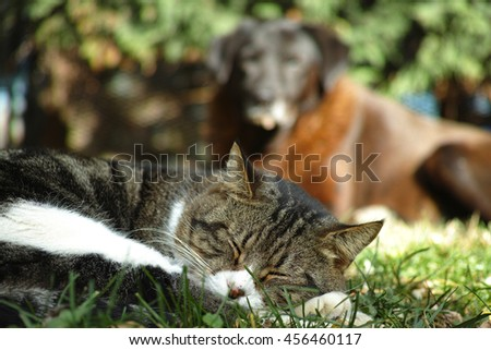 friendship between a dog and a cat - stock photo