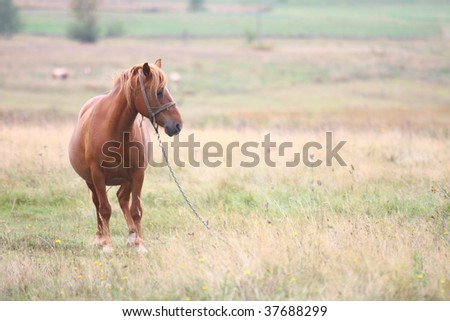 Frightened brown horse ready to run - stock photo