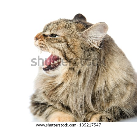 Frightened kitten lying in front. Isolated on white background. looking away - stock photo