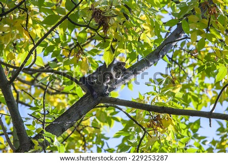 Frightened kitty sitting on the tree, can`t go down - stock photo