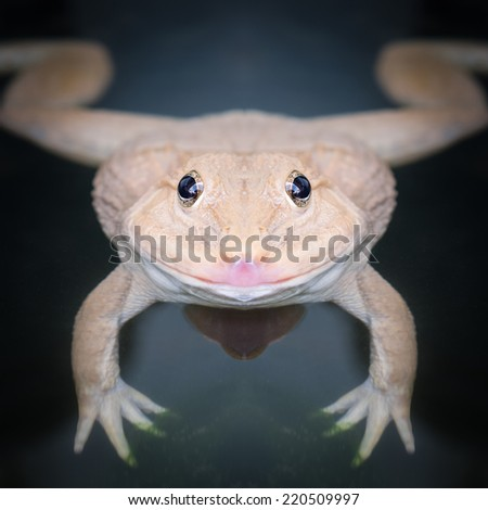Frog face close up  - stock photo