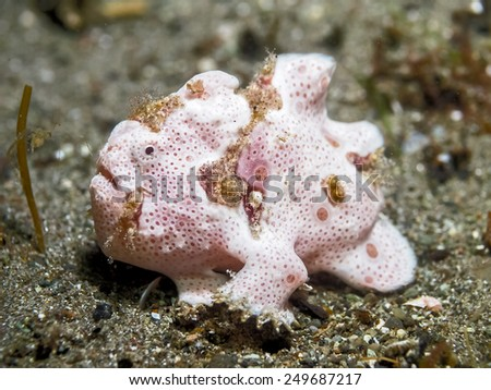 Frog fish - stock photo