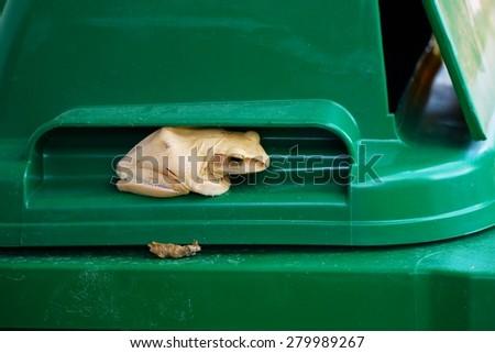 Frog hiding in a trash bin . - stock photo