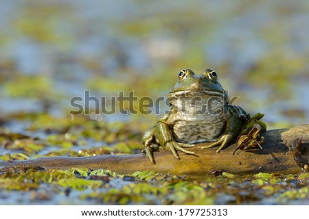 frog in natural habitat - stock photo