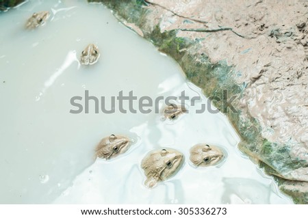 Frog in the pond - stock photo