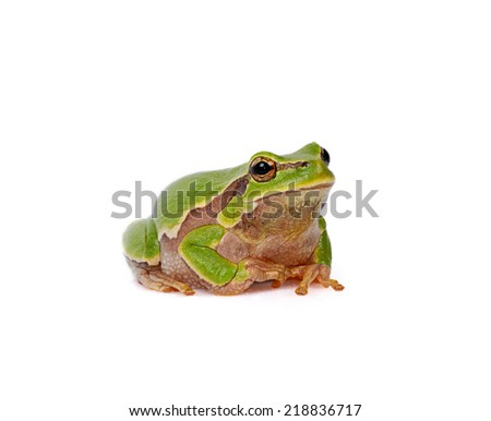 Frog isolated on the white background - stock photo