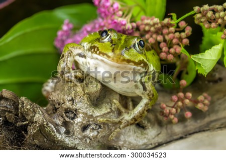 Frog Looking - stock photo