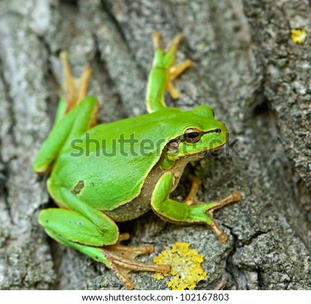 Frog on a branch - stock photo