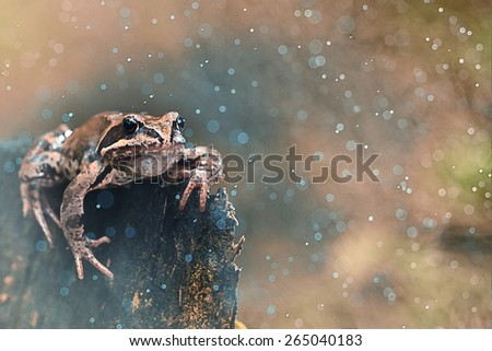 frog on a rock close-up - stock photo